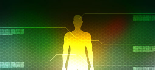 Männlicher Körper systemisch dargestellt