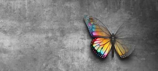 Psychologischer Berater mit Fachrichtungen - Schmetterling als Psychologisches Symbol